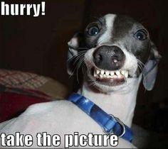 Random Funny Pictures (17 Pics)