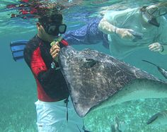 Snorkeling Shark Ray Alley Belize - Pictures And Review