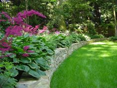 purple astilbe and hosta above stone retaining wall in shade