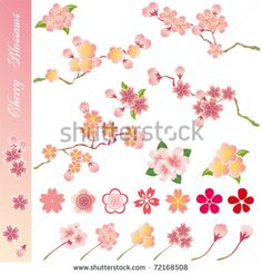 Cherry blossoms icons set. Illustration vector.