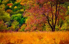 Autumn colors by Irene Mei on 500px.
