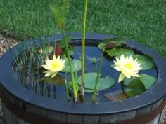Learn how to make a mini water garden for your patio or backyard. Information on suitable containers, water plants and planting ideas for your mini water garden. Ponds For Small Gardens, Small Ponds, Small Space Gardening, Container Pond, Container Water Gardens, Container Gardening, Container Design, Pond Plants, Aquatic Plants