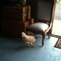 evangeline comes calling . antique store chicken