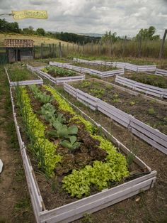 #ortiurbani #ortobiologico #orto #vegetablegarden #garden