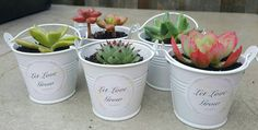 Succulent in mini white tin buckets. Bright by SucculentsAus Succulent Wedding Favors, Wedding Favours, Wedding Gifts, Buy Succulents Online, Tin Buckets, Selling On Instagram, Planting Succulents, Succulent Plants, Selling On Pinterest