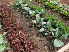 The best things to plant in the fall >> http://www.diynetwork.com/made-and-remade/learn-it/vegetables-to-plant-in-the-fall?soc=pinterest