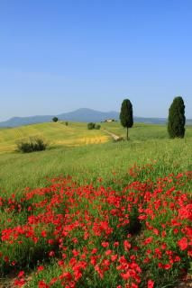 Customized Private Tour: A Total Italian Experience in Tuscany, Romer, Cinque Terre.  www.Zicasso.com.