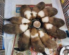 """Sheltie Flower//// This is truly what """"a herd"""" of youngsters look like when you feed using the circular bowl. Funny, I always had at least 1 kid sitting on that little """"top"""" in the very center of the """"flower""""!"""