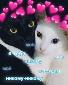 VK is the largest European social network with more than 100 million active users. Cute Cats, Funny Cats, Russian Cat, Hello Memes, Cute Love Memes, I Luv U, Cute Cartoon Wallpapers, Stupid Memes, Love Pictures