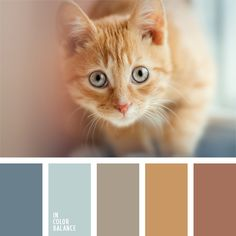 Warm and cold shades of this color palette will be appropriate when planning redecoration of a bedroom, as pastel blue gives the feeling of coolness, while.