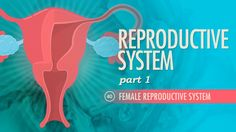 Crash Course: Female Reproductive System--explains female anatomy, and the process of ovulation Health Class, Health Lessons, Health Education, Human Body Anatomy, Human Anatomy And Physiology, Science For Kids, Life Science, Female Reproductive System, Human Body Systems