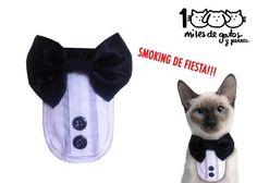 miles de gatos y perros: SMOKING PARA FIESTA - Kichink!