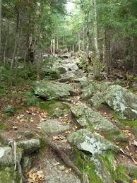 Image result for rocks in a forest