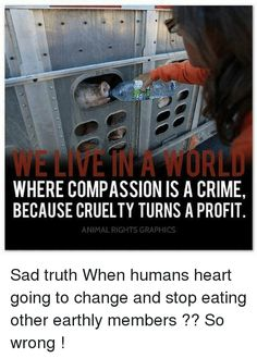 """BE VEGAN and end the part you play in upholding """"acceptable"""" violence, animal cruelty, and exploitation inside cultural """"norms"""" of society. Acknowledge the VICTIMS of your choices and turn your heart towards justice rather than injustice. It's never too late to learn reverence for life. www.vegankit.com and www.freefromharm.org"""