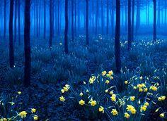 La Forêt Noir, Allemagne.