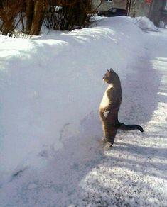 "** "" Damned snowplowz !"""