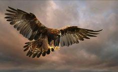 rivermusic: Golden Eagle landing Ronald Coulter