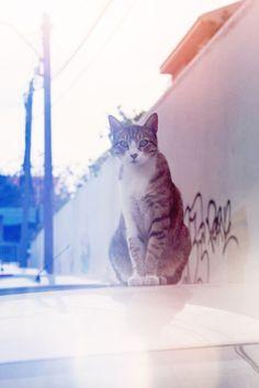israeli kitty, tel-aviv