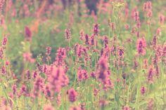 Wildflowers by Zhenya Sneg on 500px