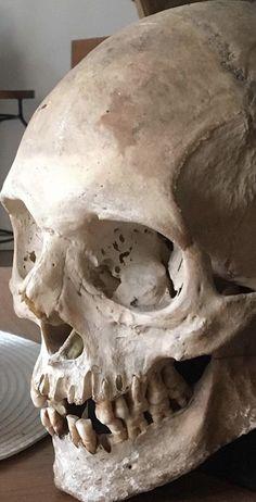 Lace Skull Tattoo, Skull Tattoos, Kunst Tattoos, Bild Tattoos, Skull Reference, Anatomy Reference, Anatomy Drawing, Anatomy Art, Skull Anatomy