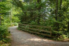 Arrowhead Provincial Park Ontario Canada Ontario Parks, Outdoor Furniture, Outdoor Decor, Garden Bridge, Country Roads, Canada, Outdoor Structures, Summer, Garden Furniture Outlet