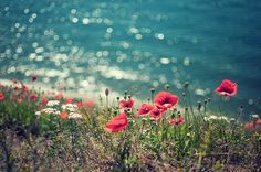 poppies by the seaside Red Flowers, Beautiful Flowers, Beach Flowers, Red Poppies, Beautiful World, Beautiful Places, I Love The Beach, Celestial, Nature Pictures