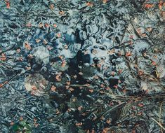 Eliot Porter, Maple Blossoms In A Woodland Pool, New Hampshire , 1961