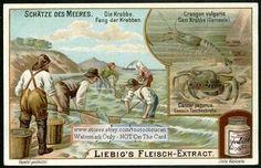 Crab Shrimp Sea Food Shellfish Fish Ocean c1902 Card
