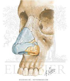 ciba medical atlas names - Google'da Ara