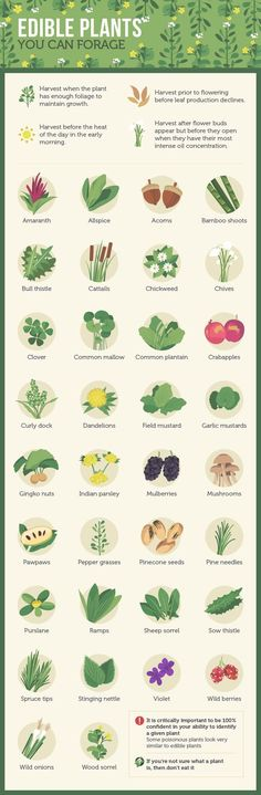Edible Plants You Can Forage For…