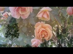 ▶ Voces de Primavera - Johann Strauss - YouTube