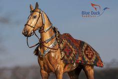 Akhal Teke tack by Blue Duck Saddlery