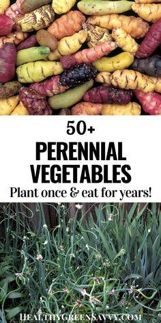 Perennial Vegetables, Planting Vegetables, When To Plant Vegetables, Growing Veggies, Growing Plants, Edible Plants, Edible Garden, Veggie Patch, Home Vegetable Garden