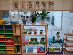 PROFE... ¿QUÉ HACEMOS HOY?: NUEVO ESPACIO: RINCÓN DE NATURALEZA Preschool Science, Preschool Classroom, Crazy Scientist, Science Classroom Decorations, Middle School Science, Creative Kids, Furniture, Teaching, Home Decor