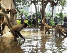 Flooded Exhibit for Spider Monkey.