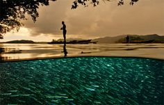 Stunning photos by David Doubilet, whose work has been featured numerous times in National Geographic.