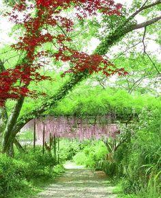 RETRIP白毫寺 この緑の美しい絶景が見られるのは兵庫県丹波にある白毫寺(びゃくごうじ)です秋の紅葉が美しいと人気の場所ですが初夏の新緑もとっても美しいです  このお写真は @rrrrei さんからお借りしました素敵なお写真をありがとうございました  #RETRIP #retrip_news #リトリップ #リトリップ国内 #日本 #兵庫 #丹波 #白毫寺 #絶景 #新緑 #旅 #美しい #japan #hyogo #tamba #beautiful #green #explorejapan #amazing #travel . グルメアカウントを作りました この度RETRIPのグルメアカウント@retrip_gourmet)を新しく作りました国内外の美味しいグルメやカフェをご紹介していきますよろしければ遊びにきてくださいね by retrip_news