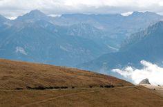 Cavalli in Val Maira - Piemonte - foto di Roberto Beltramo