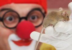 Клоун Дима 10 серия, Фокусы, Чудеса, Магия и Мышка, видео для детей