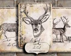 shabby deer picture - Google Search