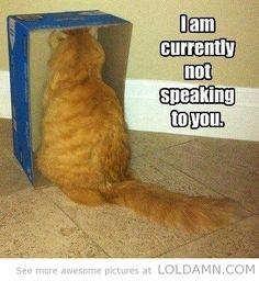 How I know my cat is mad at me…funny cat in a box