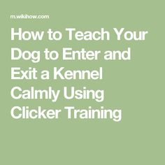 How to Teach Your Dog to Enter and Exit a Kennel Calmly Using Clicker Training