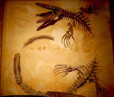 Elegant Display of Partial Dinosaur Skeleton by Curious Expeditions, via Flickr