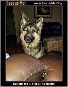 - Wisconsin German Shepherd Rescue - ADOPTIONS - Rescue Me! German Shepherd Adoption, Animal Adoption, Pet Adoption, West Bend, Post Animal, Letting Go Of Him, Wisconsin, Husky