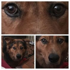 My wife was eating a chicken biscuit. Heavy breathing.... #dogpictures #dogs #aww #cuteanimals #dogsoftwitter #dog #cute