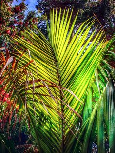 Light though Palm  by T. Malachi Dunworth  on 500px
