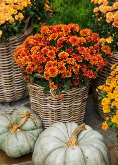 Harvest Decorating Ideas Featuring the Most Beautiful Bounty of the Season Decorating with a few big baskets of flowers is one of the simplest ways to make your fall front porch beautiful. Fall Home Decor, Autumn Home, Fall Containers, Green Pumpkin, Autumn Display, Autumn Scenes, Harvest Decorations, Fall Pictures, Gardening