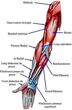 Les douleurs lancinantes dans le dos à droite