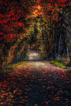 Autumn road (no location given) by John Noe