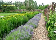 The brick walkway (And apparently lavendar is hardy in Ticonderoga @Shannon Fruchter) » King's Garden at Fort Ticonderoga